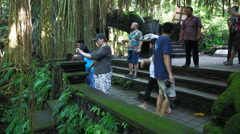 Monkeys forest in Ubud , Bali Stock Footage