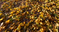 Stock Video Footage of Autumn Leaves Walk Close Up