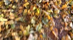 Kicking Leaves Fall Fun Stock Footage
