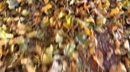 Stock Video Footage of Kicking Leaves Fall Fun