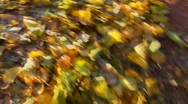 Stock Video Footage of Kicking Crunching Fall Leaves