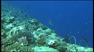 Shark diving underwater video Stock Footage