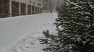 Stock Video Footage of Fir-tree near road and building
