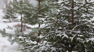 Stock Video Footage of Snowy tree