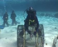 nautilus diving underwater video - stock footage