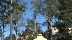 Fountain in San Francisco Eucalyptus Trees Blue Sky Stock Footage