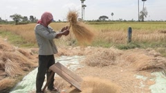 CAMBODIA-RICE HARVEST17 Stock Footage