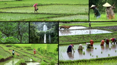 Indonesia bali rice field montage Stock Footage