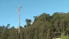 Eucalyptus trees San Francisco Hillside 1950's telephone pole Stock Footage