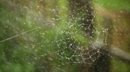 Wide Web on which large drops of rain dripping Stock Footage