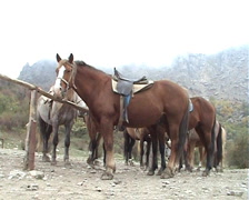 Horses Stock Footage