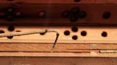 Incense Stick Timelapse 03 - stock footage