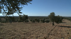 OLIVE FIELDS 7 - stock footage
