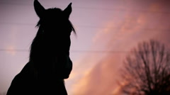 Horse Sunset HD Stock Footage