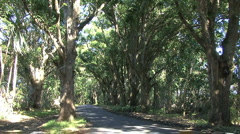 Hawaii Road in forest in Puna  Stock Footage