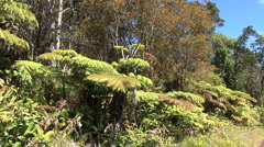 Roadside tree ferns and trees Stock Footage