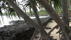 Hawaii tropical plant and seawall  Stock Footage