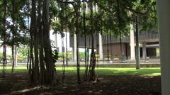 Honolulu Banyan trees capitol building Stock Footage