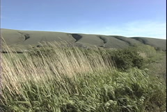 Horse Heaven Hills blowing grass  Stock Footage
