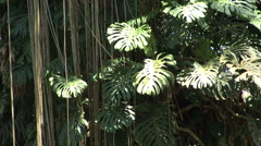 Stock Video Footage of Jungle plants in sun and shade 2