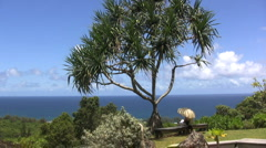 Kauai Man under a Pandanus tree by the sea Stock Footage