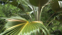 Palmetto leaves Stock Footage