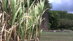 Sugar cane and mill ruins in Kauai Stock Footage