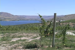 Lake Chelan vineyards WA 2 Stock Footage