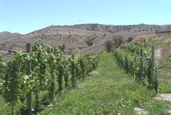 Lake Chelan vineyards WA 3 Stock Footage