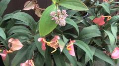 Maui Assorted tropical flowers  - stock footage