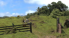 Maui Hikers climb hill and scare cow  - stock footage