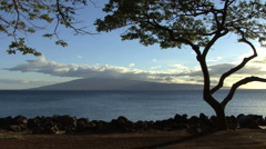 A tree on Maui frames a view of Lanai Stock Footage