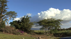 Stock Video Footage of Maui Trees, sugar cane and clouds