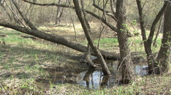 Mississippi River swampy area Stock Footage