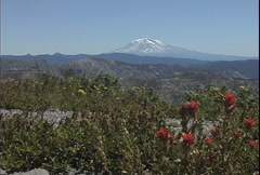Mt Adams with Indian Paintbrush Stock Footage
