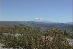 Mt Adams and Indian paintbrush Stock Footage