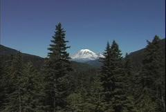 Mt Rainier with coniferous trees  Stock Footage