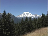Stock Video Footage of Mt Rainier beyond mountain forest