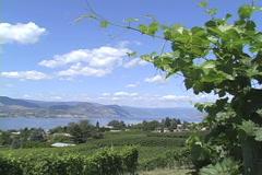 Okanogan BC vineyards and lake Stock Footage