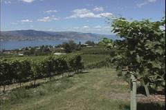 Okanogan vineyards and lake 2 Stock Footage