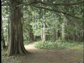 Olympic rainforest Stock Footage