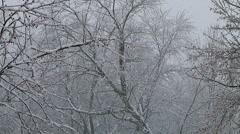 Seasons First Snow Fall  Stock Footage