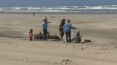 Oregon coast dogs on beach Stock Footage