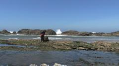 Oregon coast exploring tide pools Stock Footage
