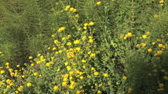 Oregon coast Horsetails and yellow flowers Stock Footage