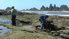 Oregon coast Looking at tide pools 5 Stock Footage