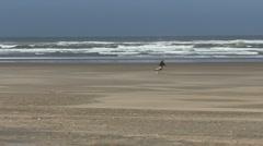 Oregon coast man and dog run Stock Footage