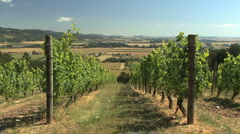 Vineyard and valley in Oregon 2 Stock Footage