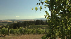 Willamette Valley and grape vines Stock Footage