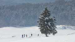 HD  Recreational Cross-Country Skiing Stock Footage